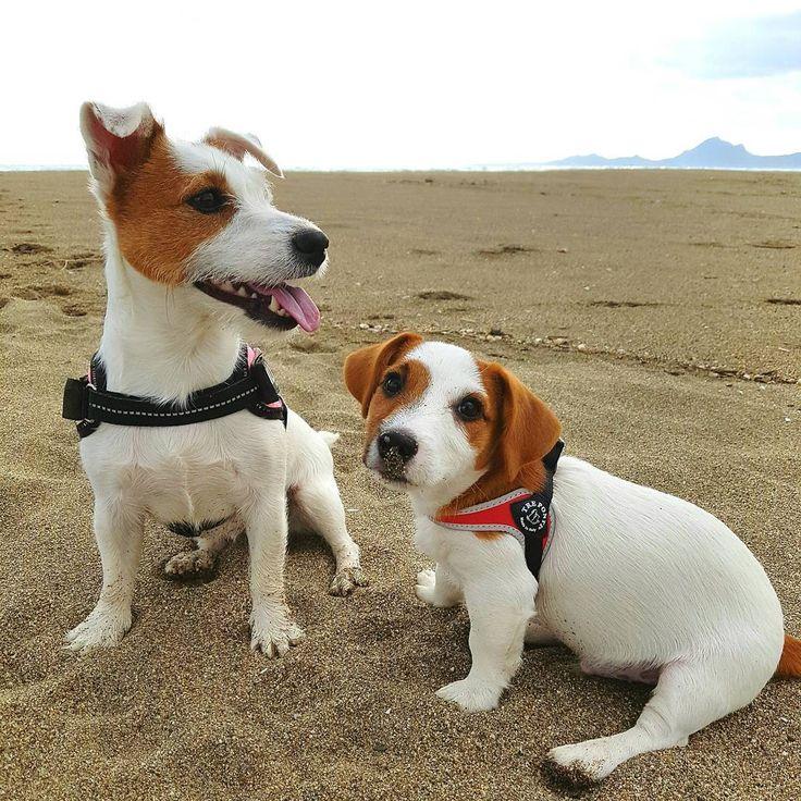 #lunaemilo#winter #maredinverno #beautiful #jackrussellterrier #jrt #jackrussellfan #jackrussell #dog #dogs #dogofinstagram #puppy #puppys #puppies #puppydog #puppylove #cane #miglioramicodelluomo❤