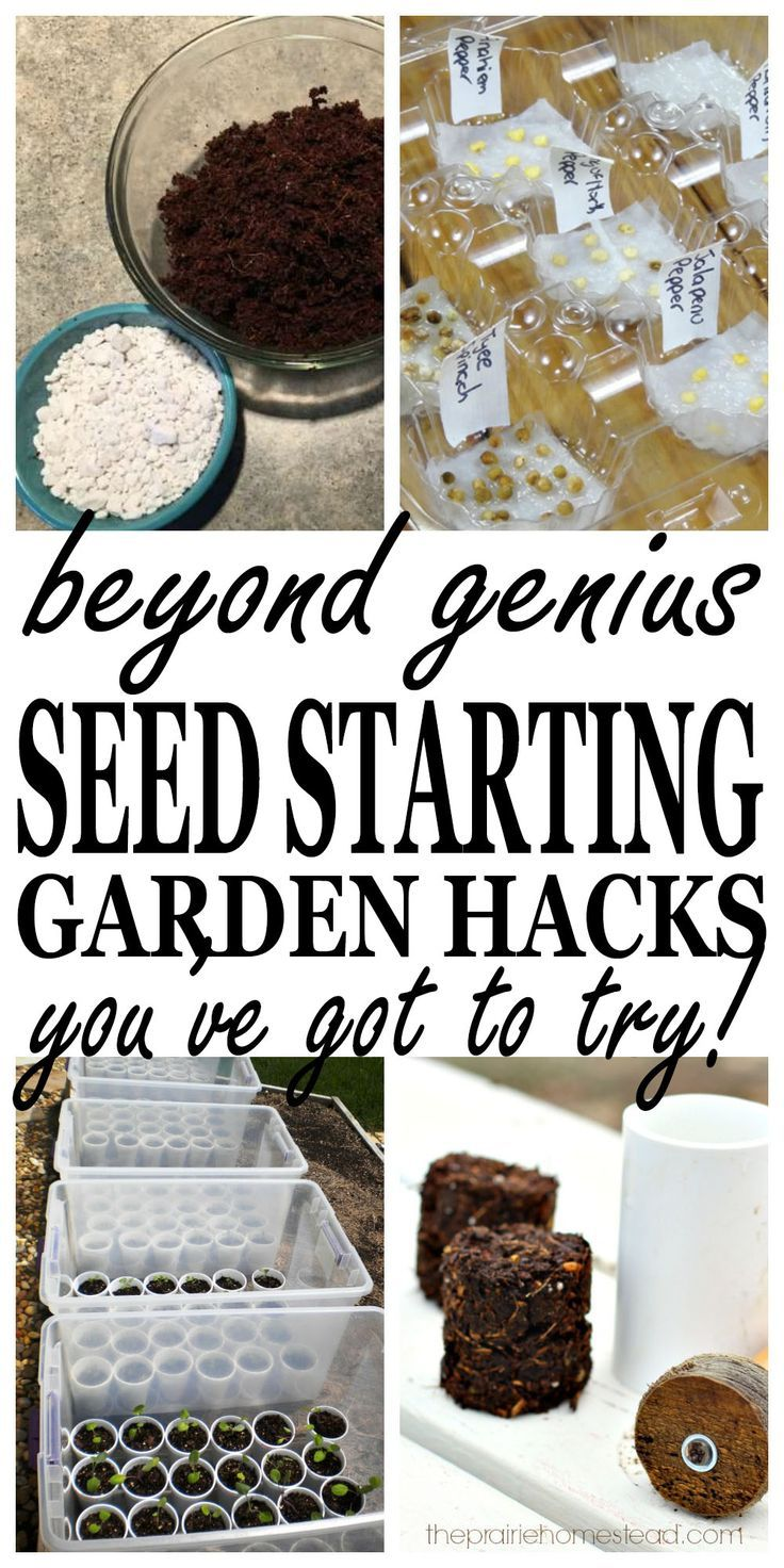 The BEST seed starting hacks to save you money when starting your garden! PIN for spring.
