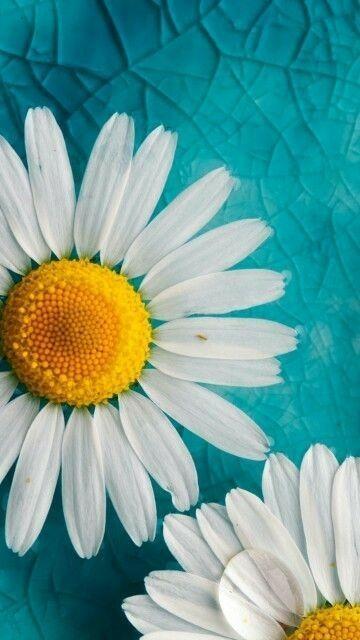 Best Gerbera wedding flower pictures ideas on Pinterest
