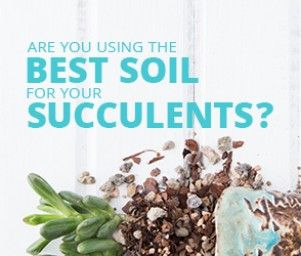 Well draining soil for succulent container gardens