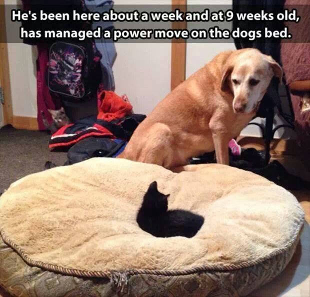 research papers on owning a dog vs. owning a cat Your cat's online owners manual, featuring articles about breed information, cat selection, training, grooming and care for cats and kittens.