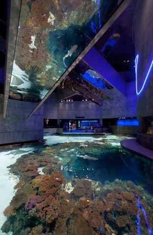 """Blacktip Reef"" Exhibit"