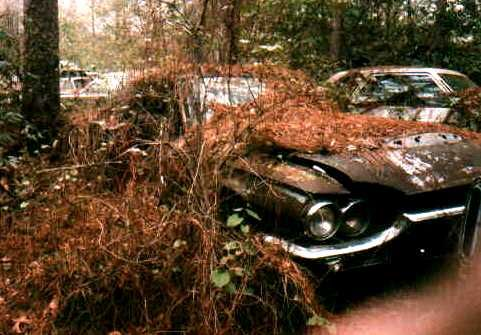 64 Thunderbird Abandoned Cars Ford Thunderbird Antique Cars