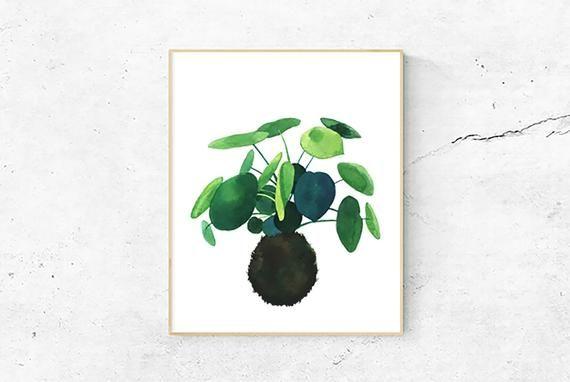 Chinese Money Plant Art Print, Japanese Kokedama plant, Watercolor Painting, Nature Illustration – Products
