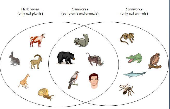 Teeth Of Herbivores Carnivores And Omnivores