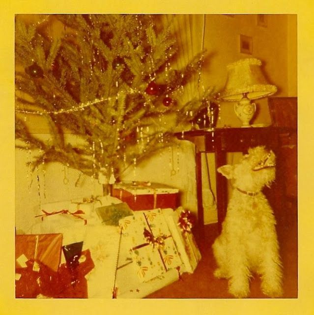 Funny Vintage Pictures of Dogs and Cats Greeting Christmas