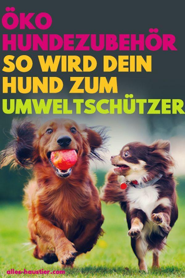 Oko Hundezubehor So Wird Dein Hund Zum Umweltschutzer Hunde