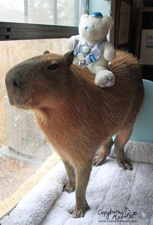 coloring pages capybara as pets - photo#35