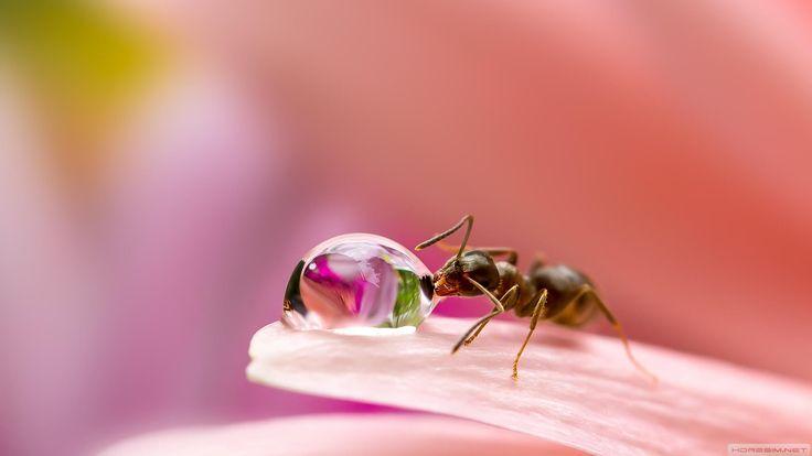 #wallpaper #Karınca #Macro #Ant #Çiçek #Flowers