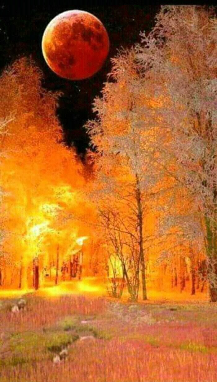 Looks like trees are aflame. Sky too dark to be sunrise.