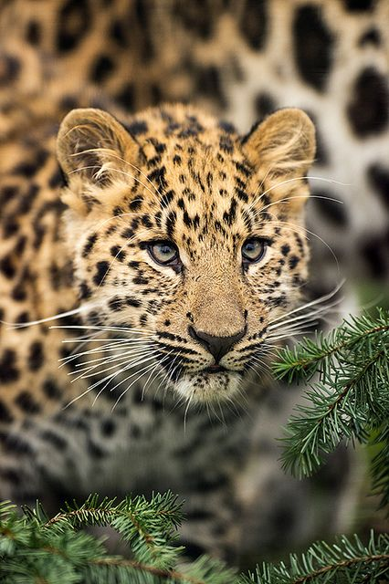 ☀Wildlife Heritage Foundation Wildlife Heritage Foundation 26/10/2012 by Dave learns his Dig SLR? on Flickr