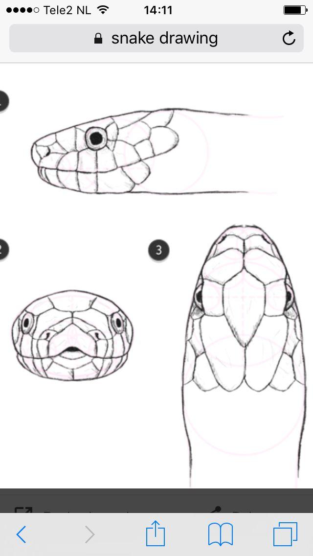 Dit is inspiratie voor de schubben omdat ze goed bij slang passen