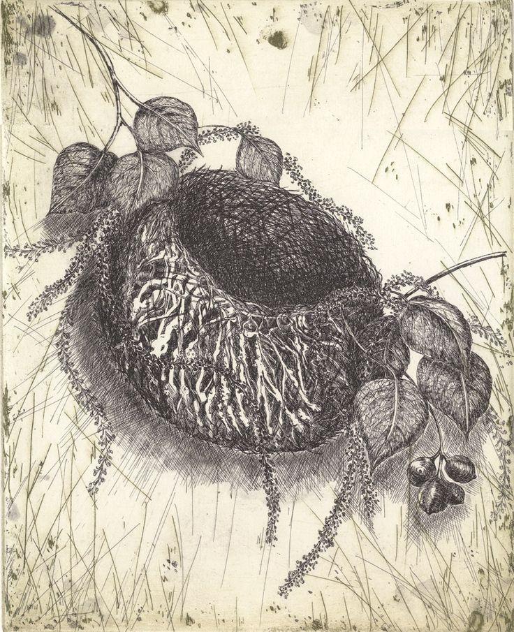 White Plumed Honey Eater etching Artist Sandi Rigby