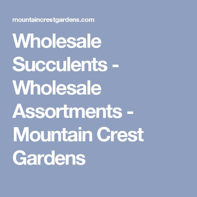 Wholesale Succulents - Wholesale Assortments - Mountain Crest Gardens