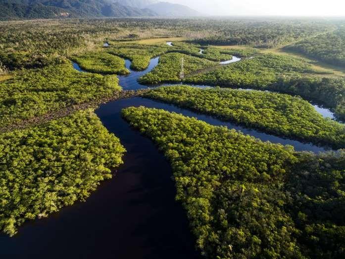 Localizada em 9 países da América do Sul, já faz tempo que a maior floresta tropical do mundo corre ... - Shutterstock