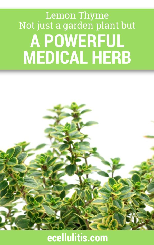 Due to all the components, thyme was used as a remedy for respiratory tract for as long as its ability to help with the infections has been discovered. It can alleviate infections such as bronchitis, cough, laryngitis, tonsillitis, and whooping. Many use the thyme tea when confronted with these conditions. #lemontyhme #health