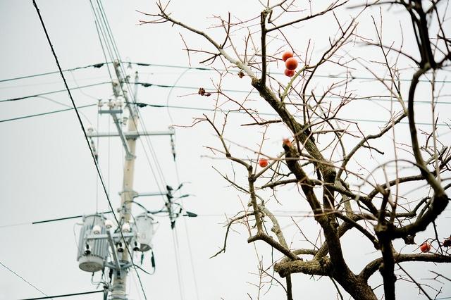 柿,電信柱 by typedow, via Flickr  Found on flickr.co