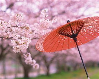 The meaning of cherry blossoms....