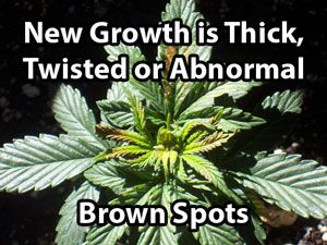 17 Best Images About High Brix Cultivation And Botany On