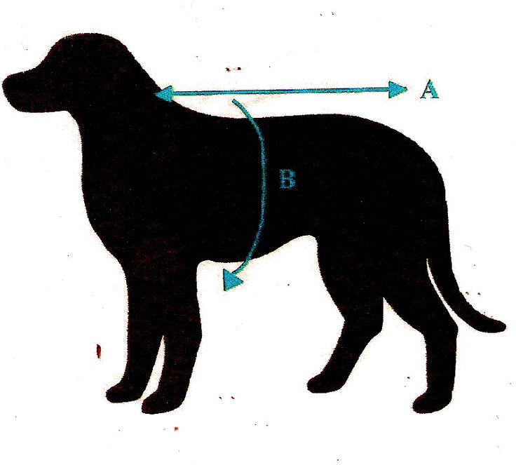 How to measure your dog for their new Rovercozy Merino Possum coat