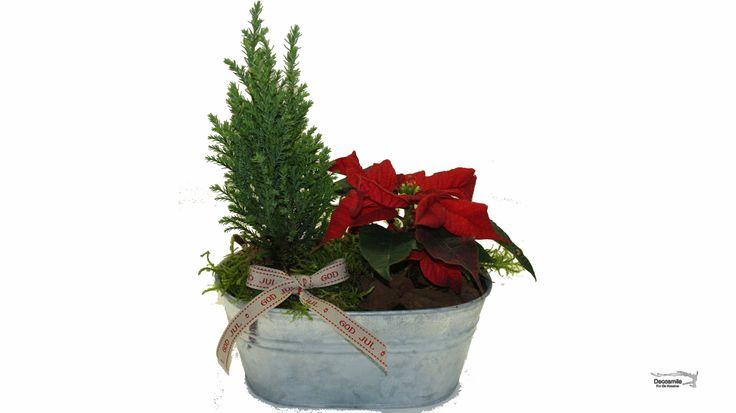 Julen er julestjerne og juletræ