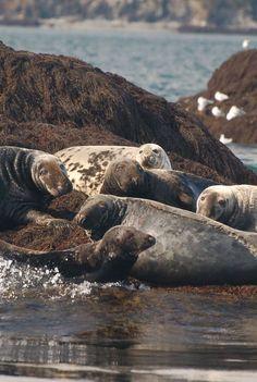 Partir en excursion à la rencontre des baleines, c'est aussi découvrir l'écosystème marin dans lequel se trouve leur habitat naturel. http://www.tourismenouveaubrunswick.ca/Produits/Groups/ObservationDesBaleines.aspx?utm_source=pinterest&utm_medium=owned&utm_campaign=tnb%20social