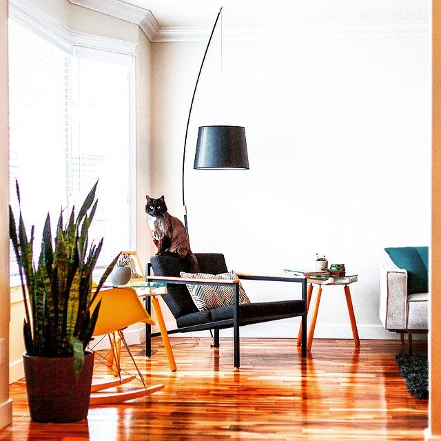 A cute little cat perches on our sleek, industrial #halifaxchair while the #boltonmultisectional looks on.  Photography by: Ryan Spotowski gusmodern.com #designfriends #canadianmodern #catsonfurniture #gusmodern #canadiandesign #modernfurniture #Padgram