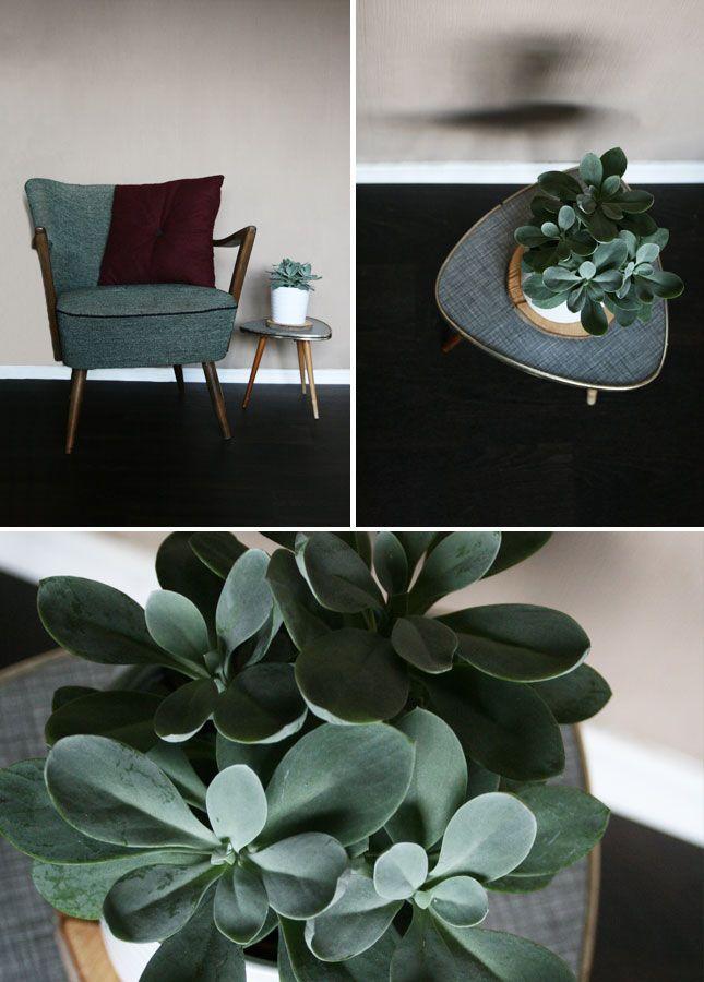 One plant - three stylings. Via Bezauberndes Leben.