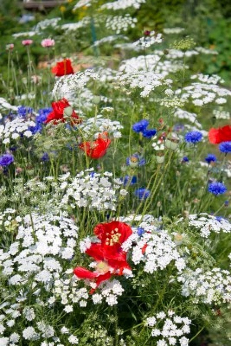 35 best images about patriotic gardens on pinterest red for Flowers and gardens pictures