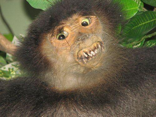 taxidermies d animaux horribles singe   Taxidermies danimaux horribles   taxidermie photo image horreur GIF fail empaille empaillage