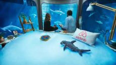 Win a Night in an Underwater Airbnb Surrounded by 35 Sharks