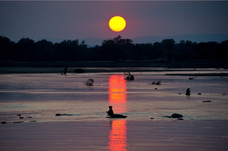 Hippo yawn at sunset, view from Flatdogs camp site, Zambia