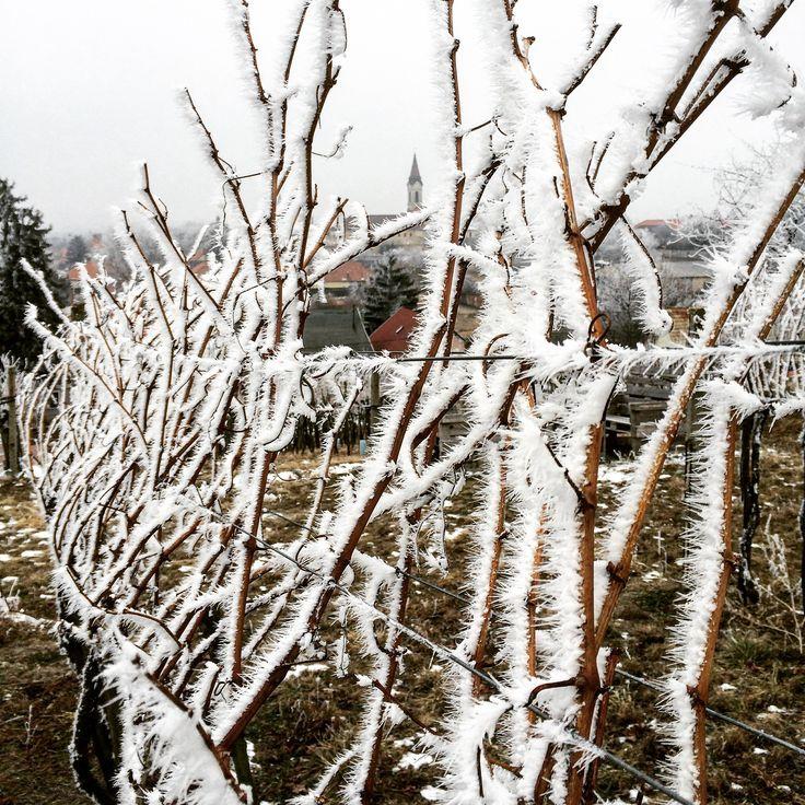 Machán-Csetvei Krisztina Jégvarázs A képet vénhegyi szőlőtúráim egyikén fotóztam. Gyönyörű volt, ahogy a jégkristályok beborították a tájat. Ilyen tartós hideg mostanában nem volt, bízom benne, hogy ez segíti a növényvédelmet. Legyen jó évjárat a 2017-es! Több kép Krisztinától: https://www.facebook.com/welovemor