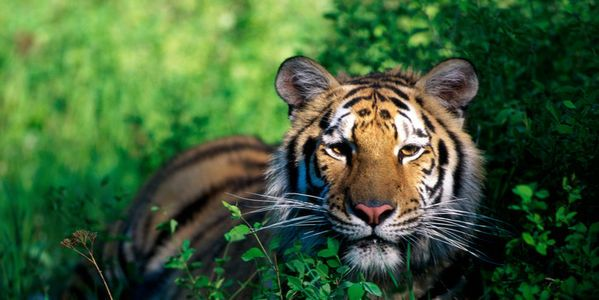 Stop the sale of exotic animals online