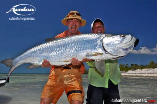 Fishing in cuba monster tarpon cuban fishing cuba for Fishing in cuba