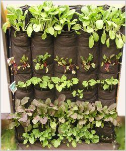 Huertas y Jardines verticales en espacios reducidos | eo HOUSE