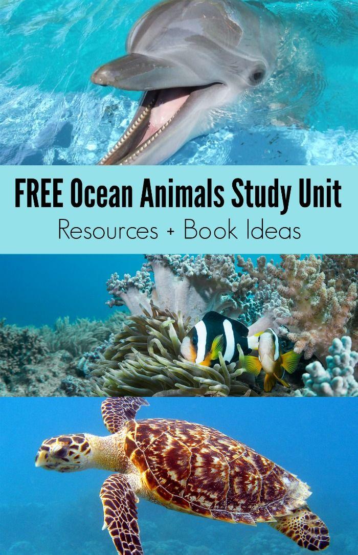 Bücher über Meerestiere + KOSTENLOSE Lerneinheit für Meerestiere