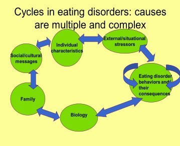 the different factors contributing to the development of eating disorders While the images of child-like women has obviously contributed to an increased obsession to be thin, and we can't deny the media influence on eating disorders, there's a lot more to it than that.