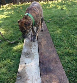 Meg on the plank.