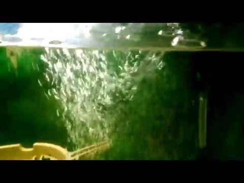 Oxigeno para el acuario. (burbujas de aire) - YouTube