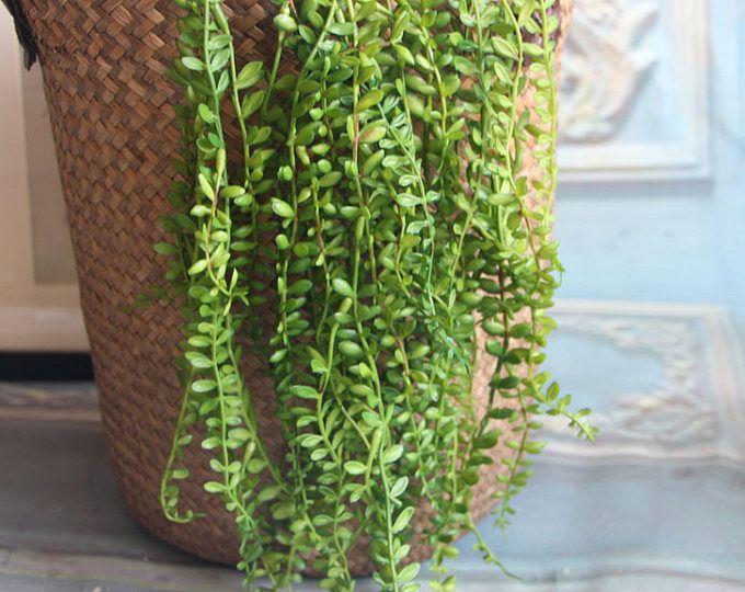 2 Pcs Longueur 87cm 3425 Perle De Simulation Etsy Plantes