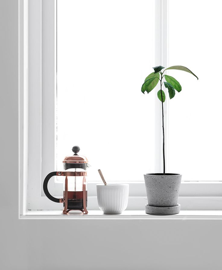 Only Deco Love: My avocado tree : 12 weeks old