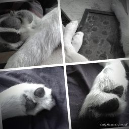 Pawsteps... A reflection.