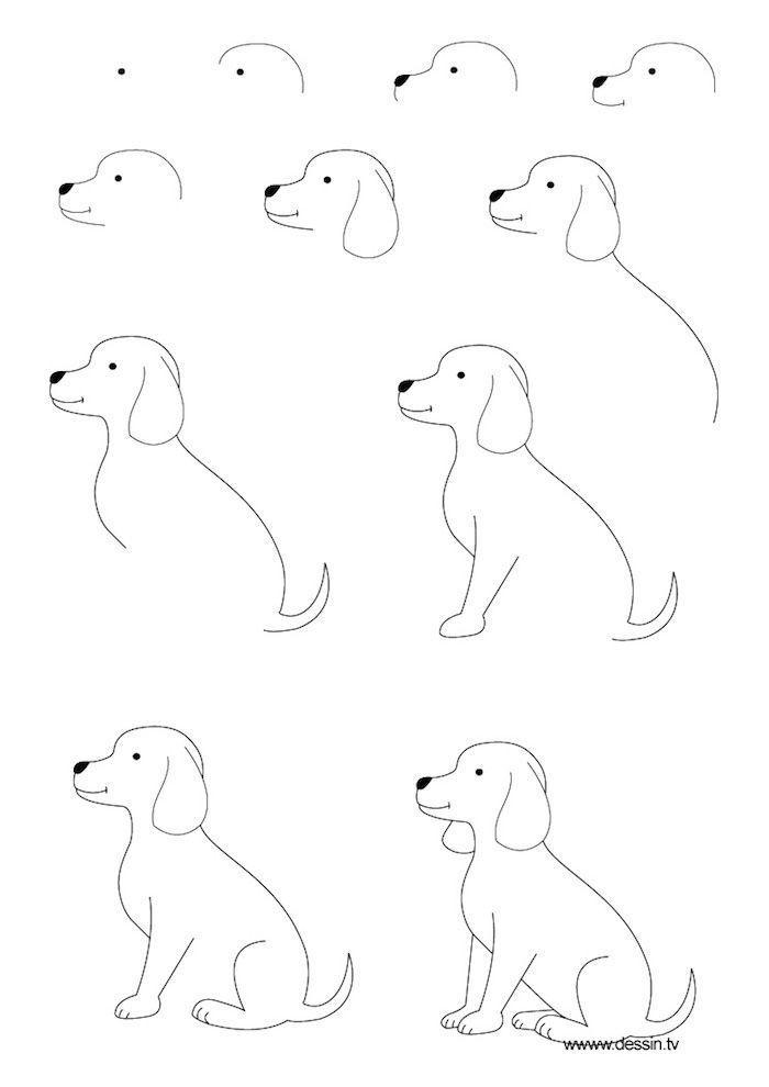 Wie Zeichnet Man Einen Hund Detaillierte Anweisungen In Elf