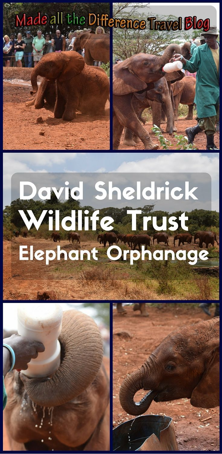 While in Nairobi, Kenya, I spent some time learning about and visiting with the orphan elephants of David Sheldrick Wildlife Trust - Elephant Orphanage.: