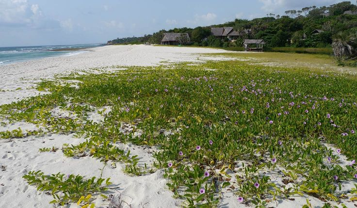 Ras Kutani is a beautiful and surprisingly remote section of mainland coast to the south of Dar es Salaam which can work particularly well in combination with safari in Selous and Ruaha.