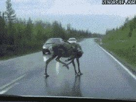 Get out of the way! (.gif)