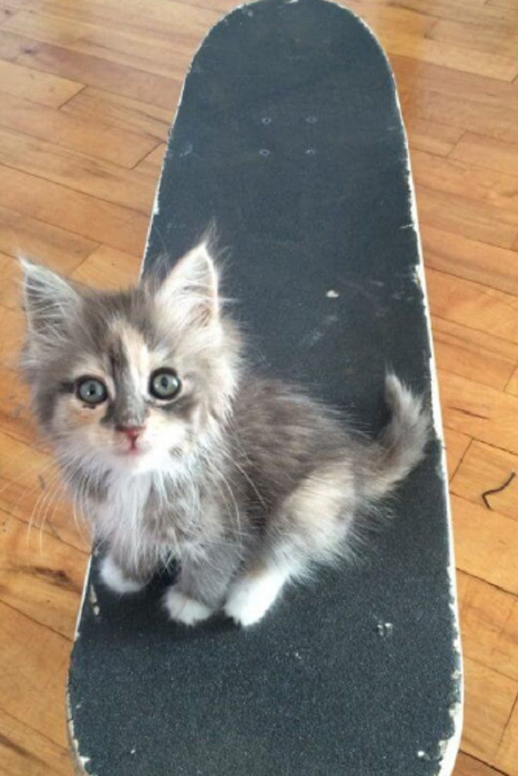 Stray Kitten Margot Walks Up To A Man Asking For Food And Love A Year Later Stray Kitten Asking Food Love Pretty Cats Cats And Kittens Cat Facts