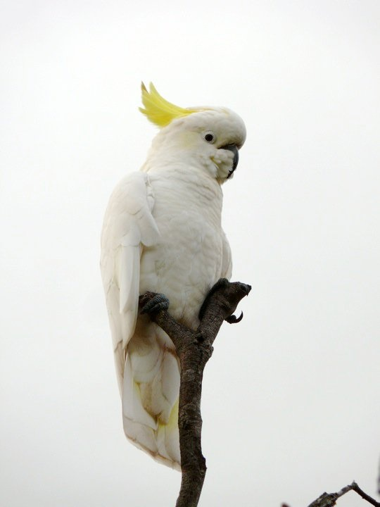 What a perfect little perch for this cockatoo.