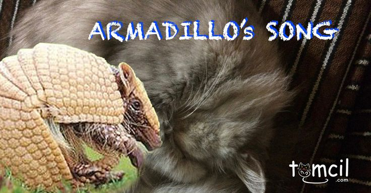 Armadillo's Song